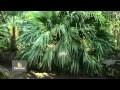Les palmiers, plantes exotiques à la portée de tous