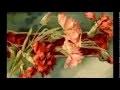 CATHARINA KLEIN -Artiste Peintre-Cartes Postales Anciennes-Les Fleurs-Flowers-Old Postcards-Vintage