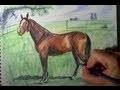 Comment dessiner un cheval avec des crayons de couleur