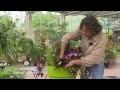 Astuces de pro pour de belles jardinières