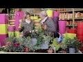 Comment constituer une jardinière d'automne et d'hiver ? - Jardinerie Truffaut TV