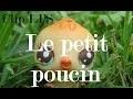 Clip LPS - Le petit poucin (Vincent Malone)