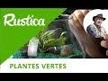 Comme réaliser un terrarium de plantes vertes