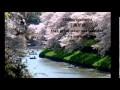Sakura : les cerisiers en fleurs