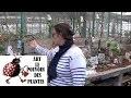 Chimlou: Culture et Jardins : Des petits pots décorés mains pour le festin des oiseaux du jardin!