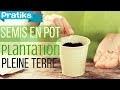 Semis en pot, division et plantation en pleine terre
