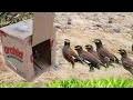 Piège À Oiseaux Rapide Génial En Utilisant Le Papier De Boîte Font Par Le Travail De Fille Intellig