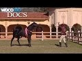 Maroc, le royaume du cheval (Documentaire de 2002 sur l'histoire du cheval au Maroc)