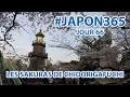 Festival japonais et cerisiers en fleurs (vlog Japon #66)