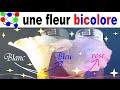 Expérience scientifique chimique # 16 : une fleur bicolore