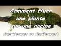 [TUTO] Comment Fixer une plante sur une racine (rapide et facile)