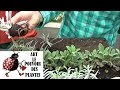 Tuto jardin : lavande comment faire une bouture :Plante vivace