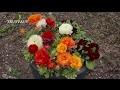 Aménager un massif fleuri au printemps - Jardinerie Truffaut TV
