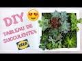 DIY - Comment créer un tableau de succulentes | Cadre végétal avec plantes grasses made in IKEA #2