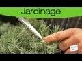 Conseil: Planter de la lavande dans son jardin