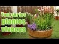 Comment planter et entretenir des plantes vivaces pour balcon et terrasse?