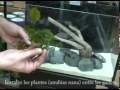 aquascaping : astuces pour décorer son aquarium simplement.