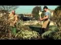Ecomatisme : Le jardin en lasagnes