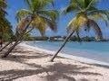 Les Antilles les paysages paradisiaques de Martinique ( l'Ile aux fleurs )