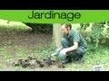 Planter des plantes vivaces sous un arbre : Astuces