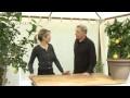 Comment entretenir un citronnier ? - Jardinerie Truffaut TV