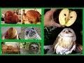 15 objets qui ressemblent étrangement à des personnes ou des animaux