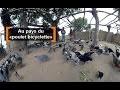 """Burkina Faso : Au pays du """"poulet bicyclette"""""""