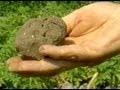 Les types de sol : le sol argileux