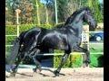 TOP 10 des chevaux les plus beau du monde