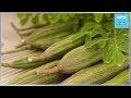 Bienfaits du Moringa Oleifera sur la santé prouvés scientifiquement - France 365