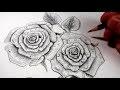 Comment dessiner des Roses au Crayon [Tutoriel]