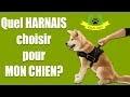 LE HARNAIS POUR VOTRE CHIEN #33/100