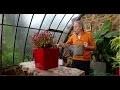 Lechuza : pots d'intérieur design avec système d'hydratation intégré - Jardinerie Truffaut TV
