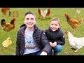 Swan et Néo veulent adopter une poule !