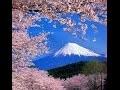 fleurs de cerisier (Japonais: SAKURA)