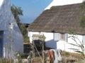 Galop de Camargue.Manitas de Plata