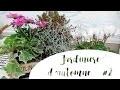 JardinieÌ€re d'automne #2 - Lierre, cyclamen, chrysanthème, calocephalus et plante mystère !