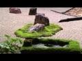 Zénitude et plénitude : Le jardin Japonais