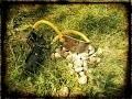 Sortie ludique - Lance pierre