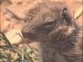 Animaux du désert : Reptiles et Cobras