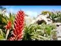 Jardin exotique - Roscoff - Vidéo d'un Jardin Remarquable 2013 du Finistère