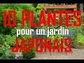 Quelles plantes pour un jardin japonais : 10 PLANTES