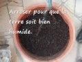 Faire pousser des Pommes de terre dans un pot
