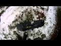 Tuto pourri : fabriquer un snowskate pas cher qui tient pas longtemps non plus