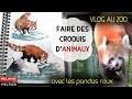 COMMENT FAIRE DES CROQUIS D'ANIMAUX #Vlog au zoo