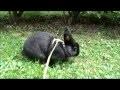 Quand les lapins s'amusent... Smart rabbits