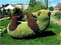 L'art des topiaires : comment sculpter vos buissons?