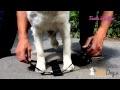 Harnais de se�curite� pour chien - AtooDog