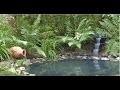 Comment créer un bassin de jardin avec liner ? - Jardinerie Truffaut TV
