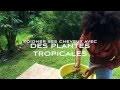 Soigner Ses Cheveux Afro/Crépus Naturels Avec Des Plantes Tropicales